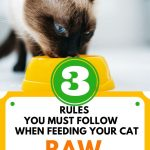 Food Safety Superhero Fighting Food-borne illness and food poisoning prevention - 3 rules you must follow when feeding your cat raw food