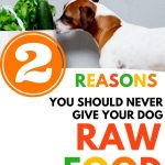 Food Safety Superhero Fighting Food-borne illness and food poisoning prevention - 2 reasons you should never give your dog raw food