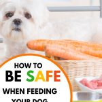 Food Safety Superhero Fighting Food-borne illness and food poisoning prevention - How to be safe when feeding your dog raw food