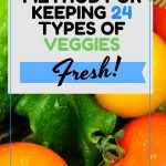 The Best Method for keeping 24 different types of veggies fresh
