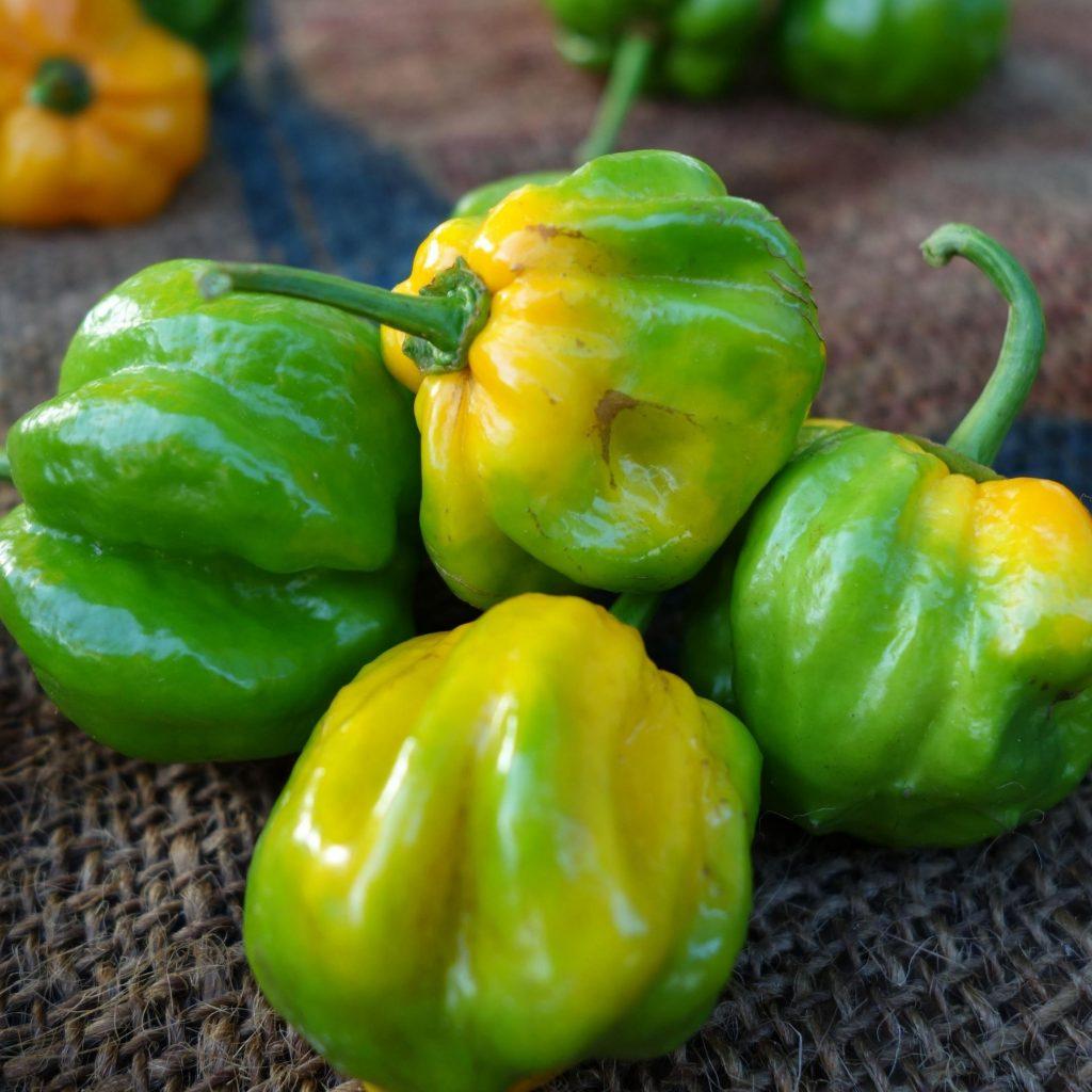hot pepper in the eye and skin
